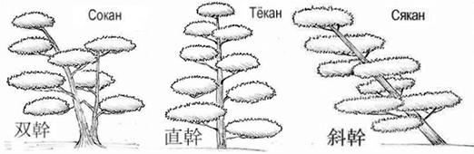 формы бонсаи