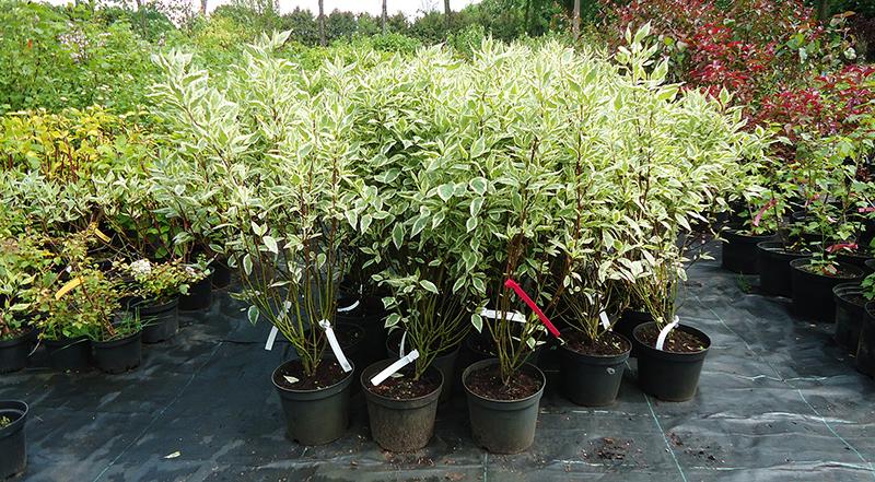растений в контейнерах