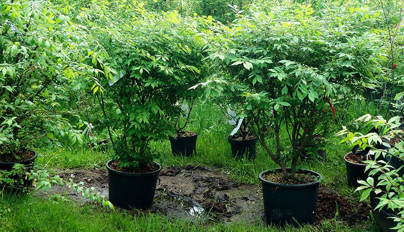 купить растения в контейнерах