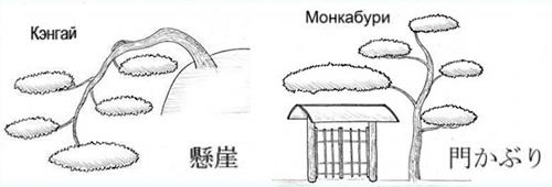 формы садовых бонсаи